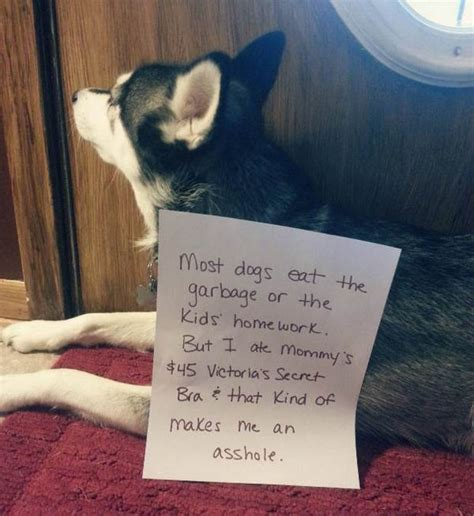 32 Dog Shaming Photos Hilariously Caught In The Act
