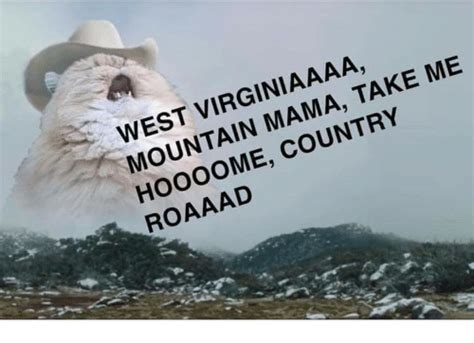 #harvey #my cats #cat #cats #cowboy cat #i dont think this will. WEST VIRGINIAAAA MOUNTAIN MAMA TAKE ME HOo0OME COUNTRY ...