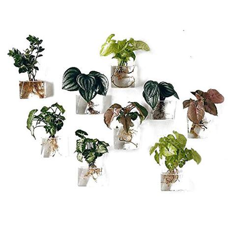 Product Of The Week Wall Hanging Glass Planters by Pack Of 8 Wall Hanging Planters Glass Hanging Plant