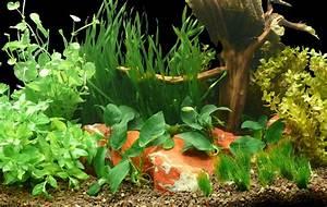 Miniteich Pflanzen Set : pflanzen set vallisnerien co bis 450l ~ Buech-reservation.com Haus und Dekorationen