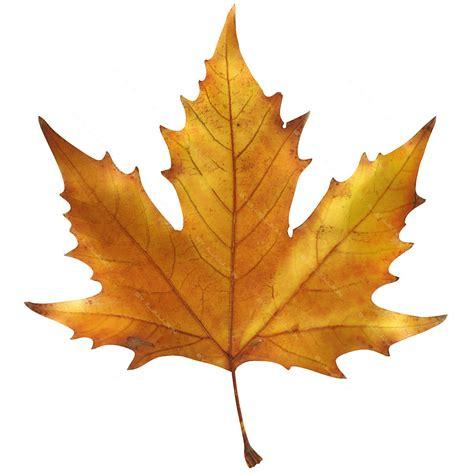 maple leaf maple leaf поиск в green kiev