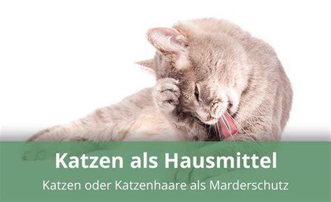 marder gegen katze helfen katzenhaare gegen marder 187 anwendung wirkungsweise