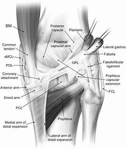 Posterolateral And Posteromedial Corner Injuries Of The