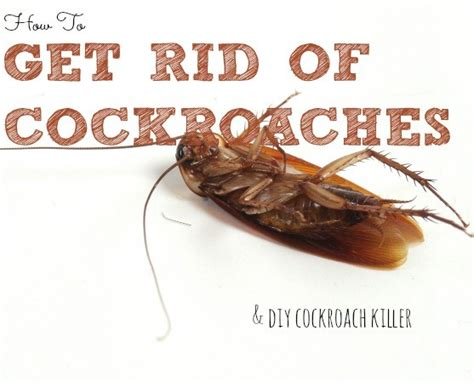 how to get rid of cockroaches in kitchen cabinets top 10 most popular posts in 2015 housewife how to 39 s