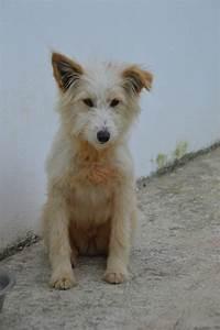 Hunde Aus Zentral Portugal : hunde aus zentral portugal adoptieren vicky ~ Lizthompson.info Haus und Dekorationen