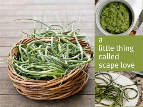 garlic scapes recipe  crisper whisperer  eats