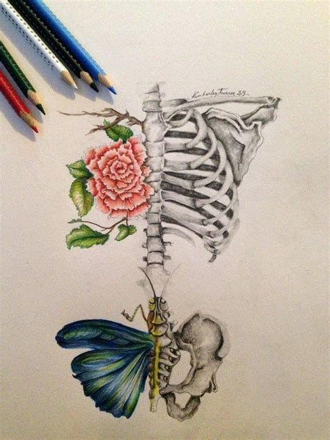 Butterfly Drawing Ideas Getdrawings Free For