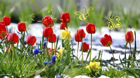 printemps si e social quelle fleur du printemps es tu