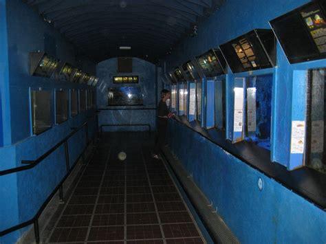 banyuls 3 visite de l aquarium de l observatoire