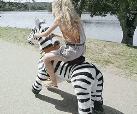 ride  animals