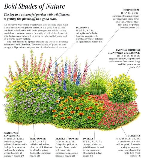 wildflower garden plans bold shades of nature garden layouts and planting schemas pintere