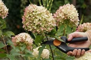 Hortensien überwintern Im Garten : hortensien ~ Frokenaadalensverden.com Haus und Dekorationen