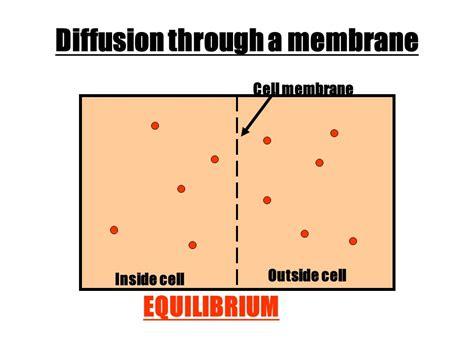 Equilibrium Cell Membrane 28193 | NOTEFOLIO