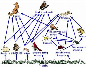 Science Class  Summary 3 Food Chain And Food Web