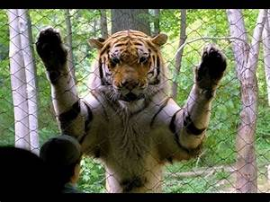 Decapitation Gone Wrong Monica Lewinsky Book And Tiger Attack At Bronx Zoo YouTube