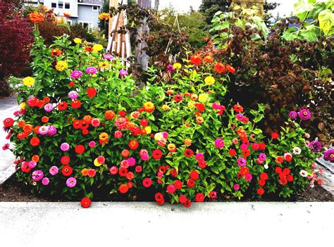 flower bed design ideas home decorating ideas  tips