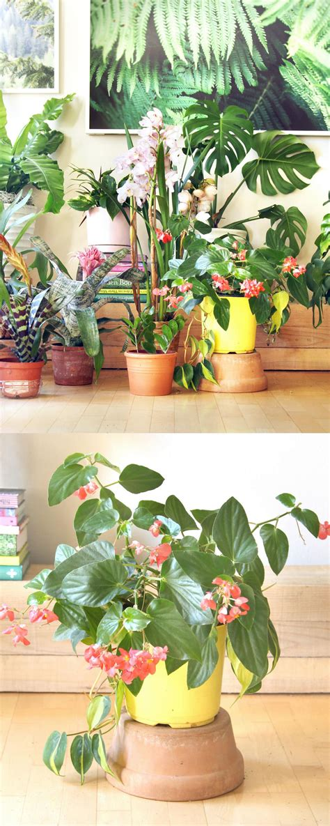 grow ls for indoor plants 18 most beautiful indoor plants 5 easy care tips