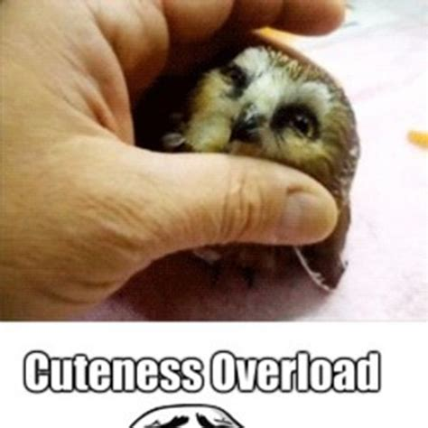 Cuteness Overload Meme - cuteness overload meme 28 images cuteness overload know your meme 25 best memes about