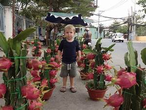 So this is how Dragon Fruit grow! | Saigon | Pinterest ...