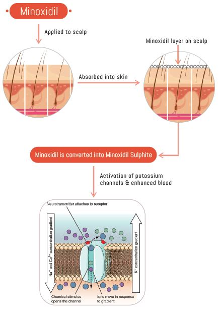 Minoxidil: Uses, Dosage, Precautions & Side effects