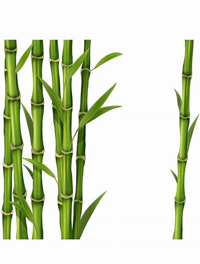 Bamboo Transparent Background Clipart Drawing Clip Sugarcane