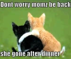 cat jokes for cat animal humor photo 19965451 fanpop