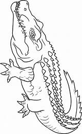 Crocodile Coloring Pages Animals Crocodiles Animal Outline Alligators Drawing Print Sheets Getdrawings Town sketch template
