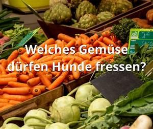 Welches Gemüse Zu Welcher Jahreszeit : welches gem se d rfen hunde fressen 30 gem sesorten die gesund sind ~ Whattoseeinmadrid.com Haus und Dekorationen