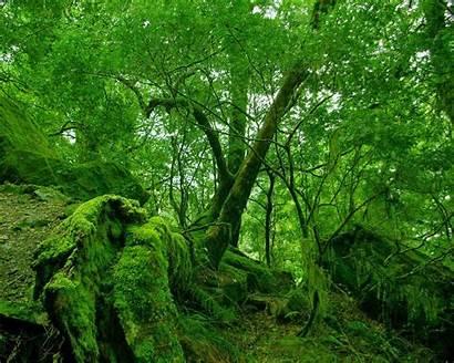 Rain Nature Natural Wallpapers Rainy Desktop Wallpapersafari