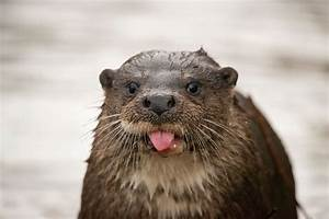 22 adorable animals stick out their tongues and say cheese ...  Animal