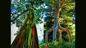 Most beautiful trees in the world, 10 Wonderful Trees in ...