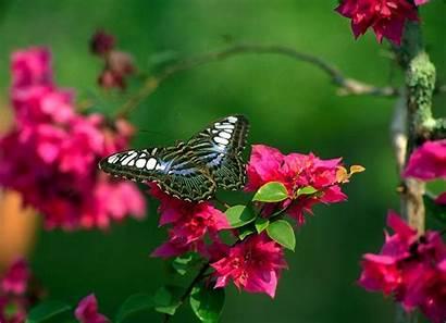 Butterfly Flowers Natural Butterflies Desktop Flower Wallpapers