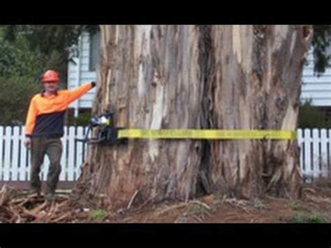"""Tree Removal"" and Tree Climbing Techniques with Chainsaws"