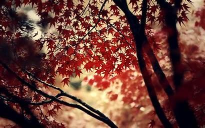 Wine Theme Maple Leaves Wallpapersafari