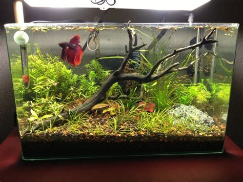 129 Best Images About I Want A Betta On Pinterest