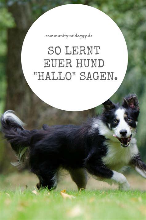 hallo dog hunde hunde sachen und tricks fuer hunde