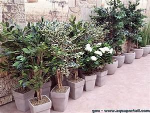 Plante Exterieur Artificielle : plante artificielle d finition et explications ~ Teatrodelosmanantiales.com Idées de Décoration