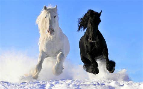 horse horses most