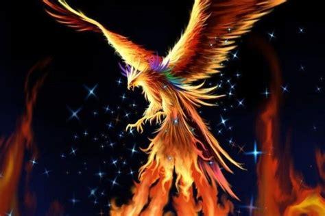 Phoenix Bird Wallpaper ·① WallpaperTag