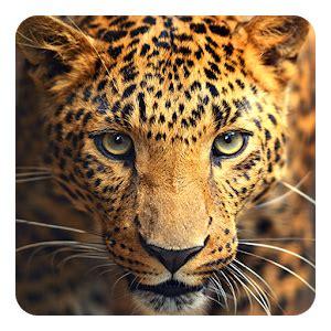 wild animals  wallpaper  pc