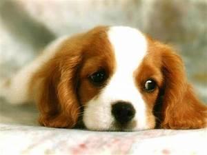 Cute Dog ! - Dogs Wallpaper (13286656) - Fanpop