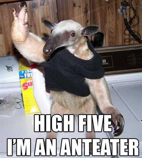 Anteater Meme - funny giant anteater funny animals