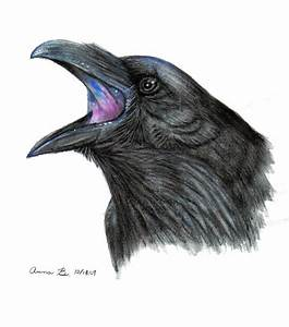 Watercolor Raven by Music-Raven on DeviantArt