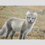 Images Of Land Animals   600 x 450 jpeg 39kB