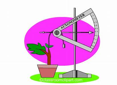 Science Plant Growth Clipart Animations Animated Gacc