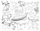 Coloring Animal Mind Numbing Activities sketch template
