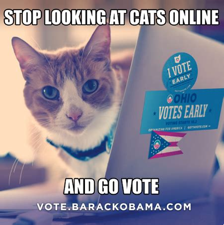 I Voted Meme - obama caign deploys cat meme to get out the vote in ohio observer