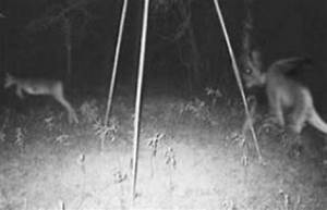 Top 10 Jersey Devil Sightings with Pictures Proved it is ...