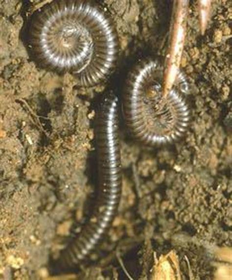 rid  worms  pavement thriftyfun