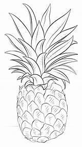Pineapple Coloring Pages Fruits Potatoes sketch template